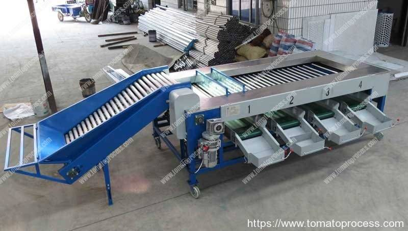 Automatic-Cherry-Tomato-Size-Sorting-Machine-for-Sale
