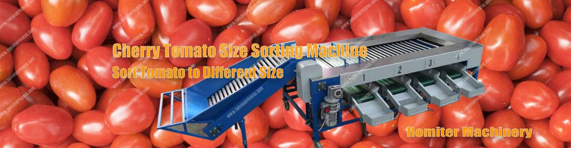 Banner01-Cherry-Tomato-Size-Sorting-Grading-Machine-Supplier-Manufacture
